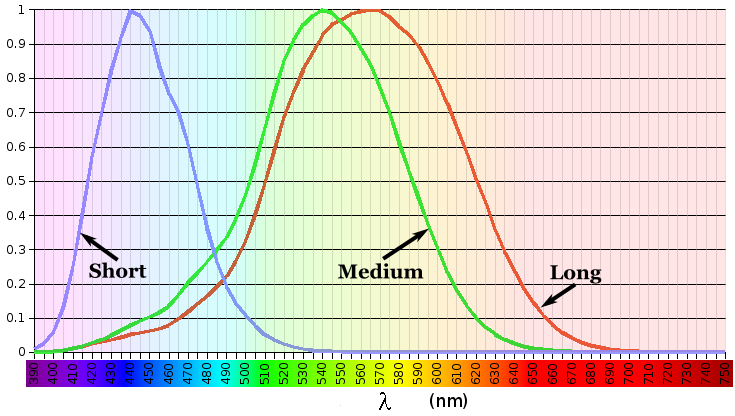 Line chart showing the degree of stimulation of each of the 3 types of cone cells by different wavelengths of light. The X axis is wavelengths from 390 nanometers to 750 nanometers. The Y axis is from 0 to 1. The lines show three bell-shaped curves, peaking at wavelengths 420, 534, and 564.