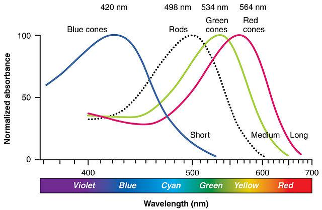 Line chart showing the degree of stimulation of each of the 3 types of cone cells and the rod cells by different wavelengths of light. The X axis is wavelengths from 390 nanometers to 750 nanometers. The Y axis is from 0 to 100. The lines for the cones show three bell-shaped curves, peaking at wavelengths 420, 534, and 564. The line for the rods show a bell-shaped curve peaking at 498.